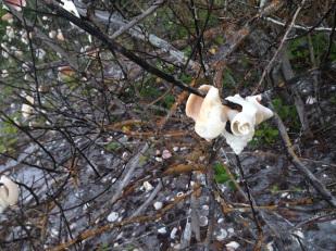 Así de hermosos lucían los caracoles en este árbol.